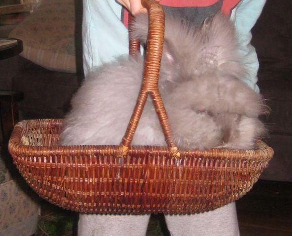 Spinning Angora Rabbit Yarn 1