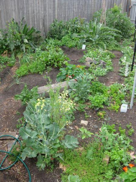 Tour of my garden 2010 10