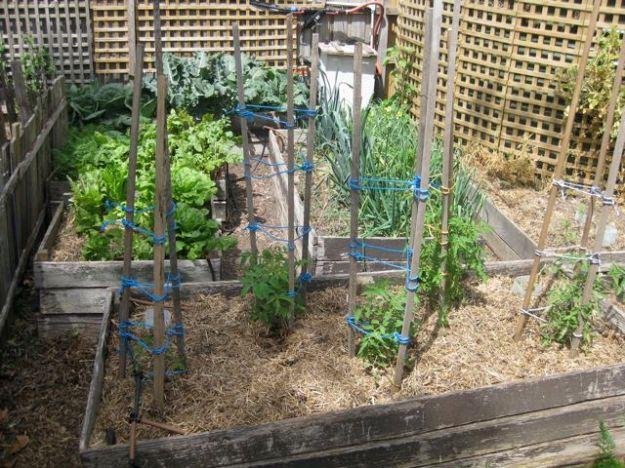 Tour of my garden 2010 5