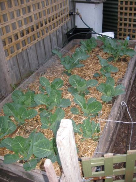 Tour of my garden 2010 8