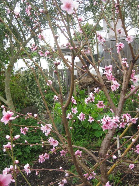 Tour of my Garden 2012 10