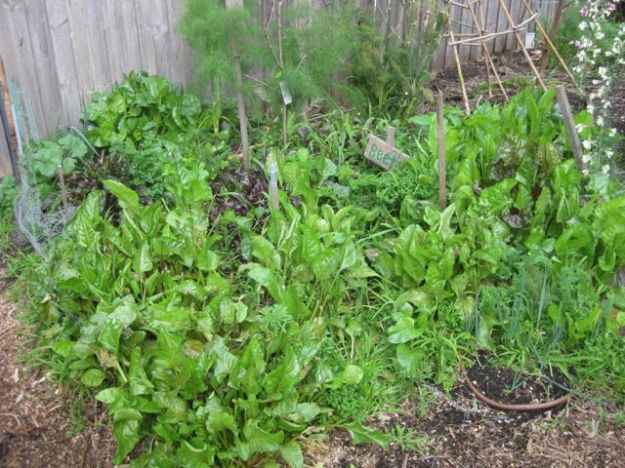 Tour of my Garden 2012 2