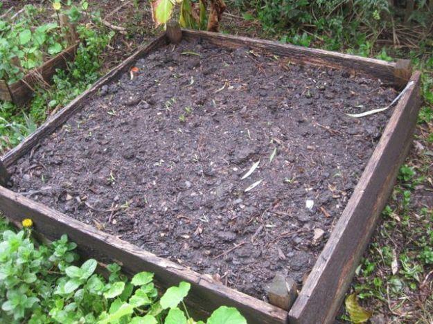 Tour of my Garden 2012 3