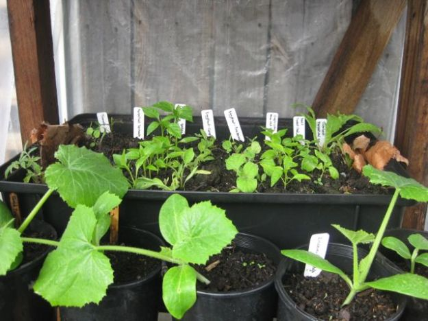 Tour of my Garden 2012 4