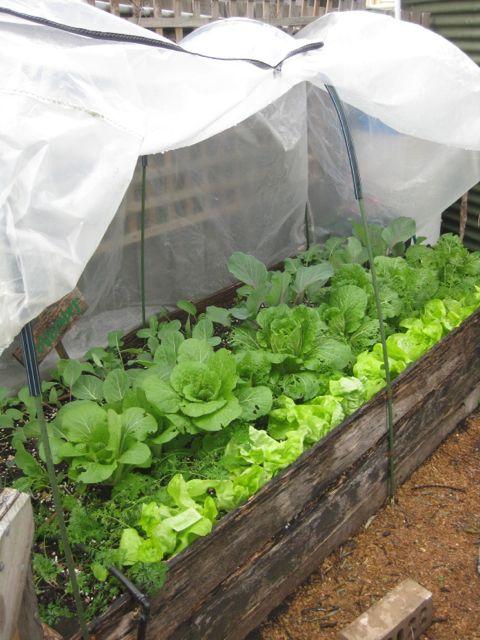Tour of my Garden 2012 6
