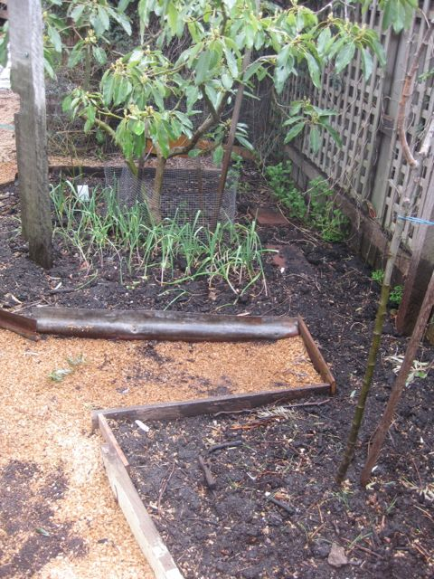 Tour of my Garden 2012 9