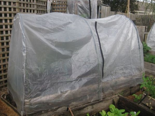 DIY Greenhouse 1