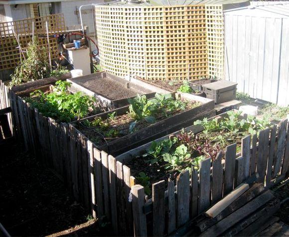 My vegie garden