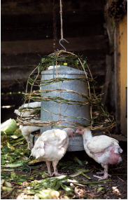 Asphyxia wove a basket cover for the chook food to keep wild birds out.